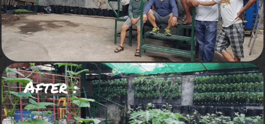 The PTC Calumpit Mini Organic Garden