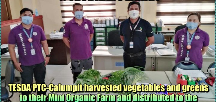 TESDA PTC Calumpit harvested vegetables and greens to their Mini Organic Farm and distributed to the Job Orders and nearby residents